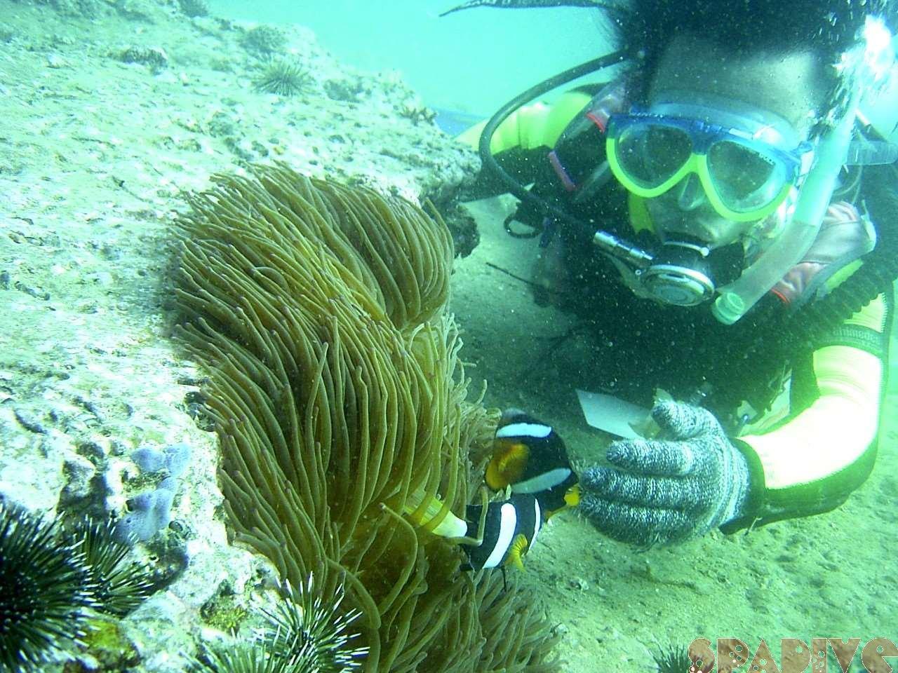 2004年11月撮影海フォトギャラリー|南紀白浜スパダイブ