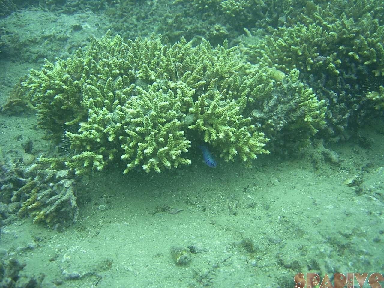 2005年4月白浜権現崎海中画像