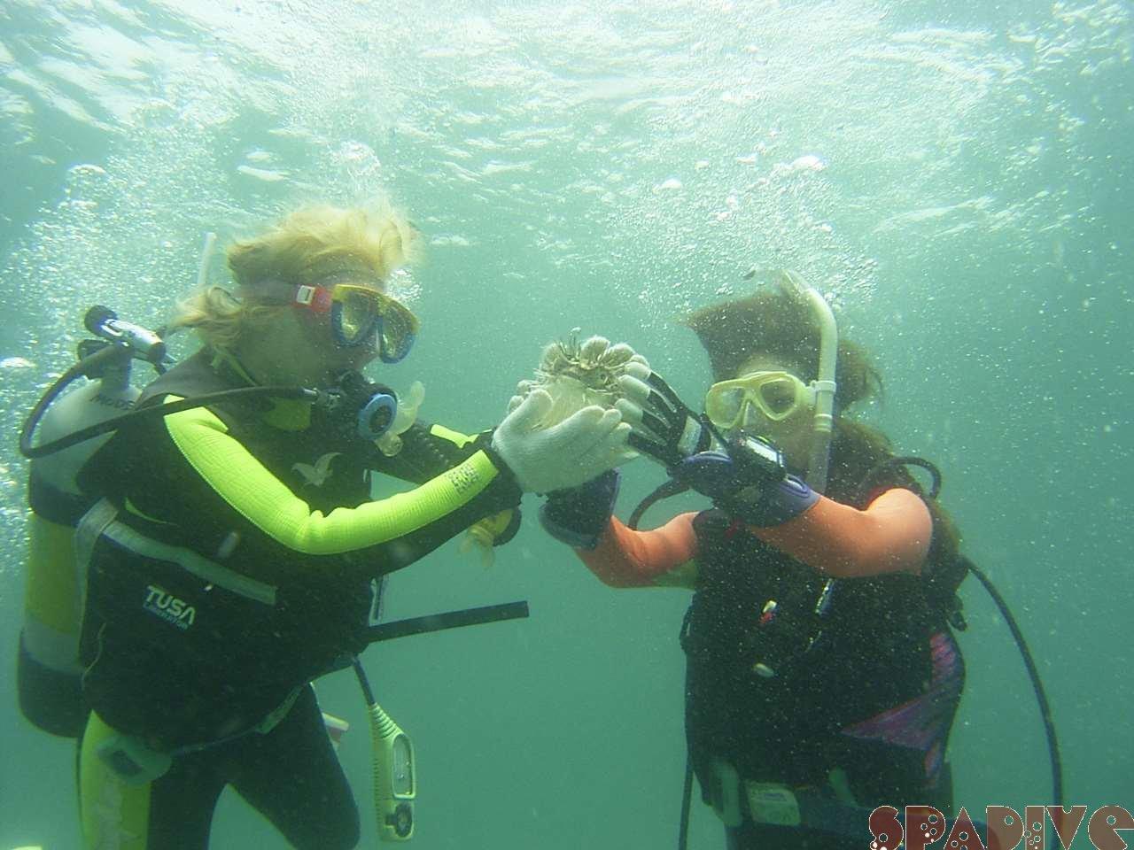 2005年05月撮影海フォトギャラリー 南紀白浜スパダイブ