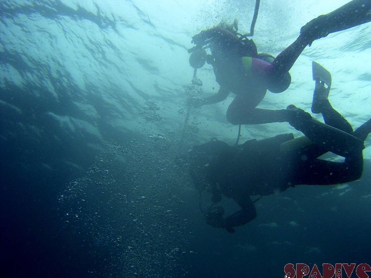 2005年07月撮影海フォトギャラリー 南紀白浜スパダイブ