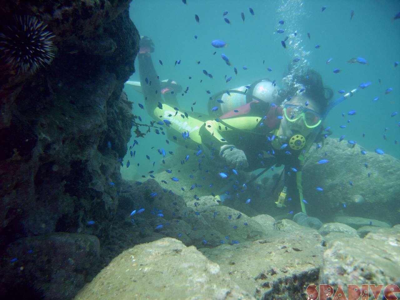 2006年7月白浜権現崎海中体験ダイビング中画像