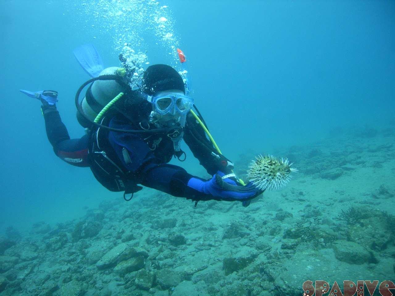 2007年3月撮影海フォトギャラリー 南紀白浜スパダイブ
