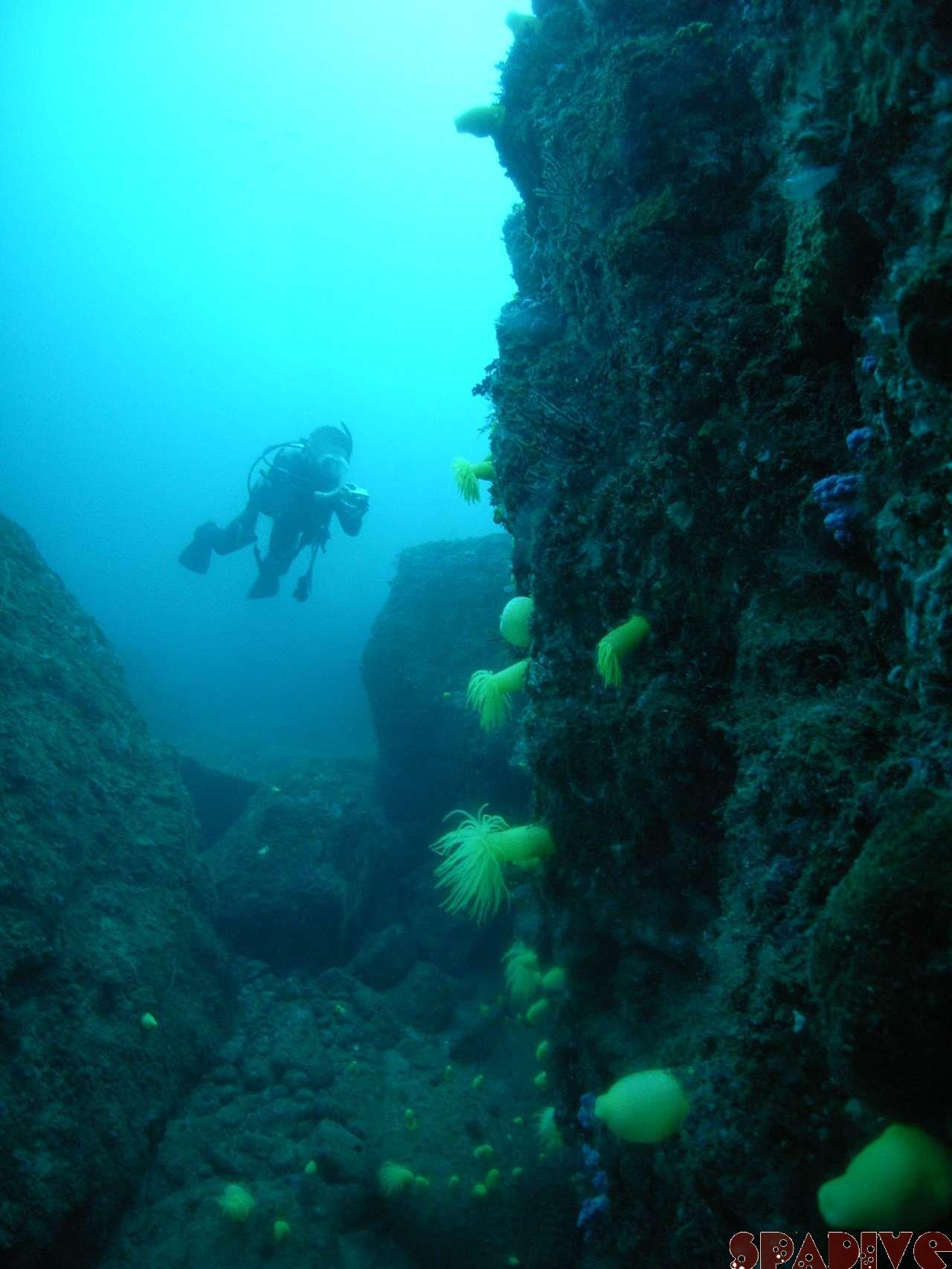2007年4月撮影海フォトギャラリー|南紀白浜スパダイブ