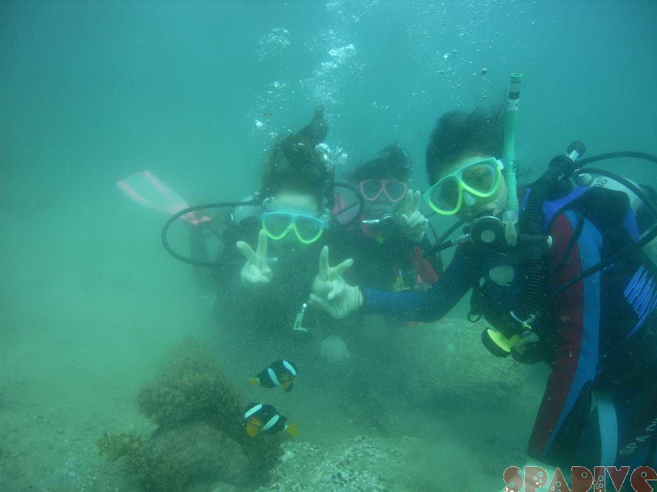 2007年6月撮影海フォトギャラリー|南紀白浜スパダイブ