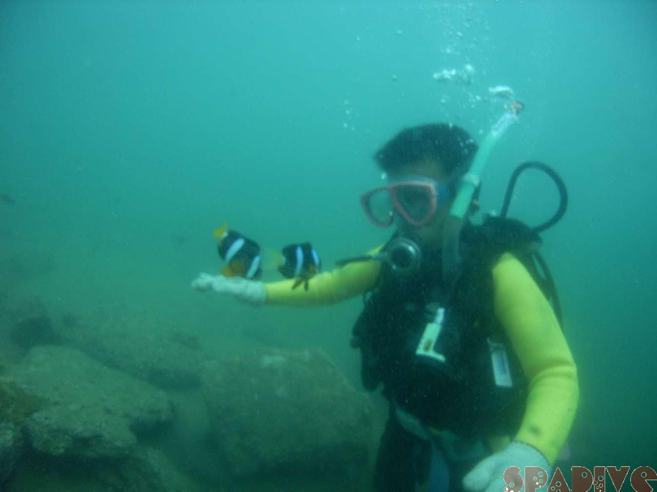 2007年8月撮影海フォトギャラリー|南紀白浜スパダイブ