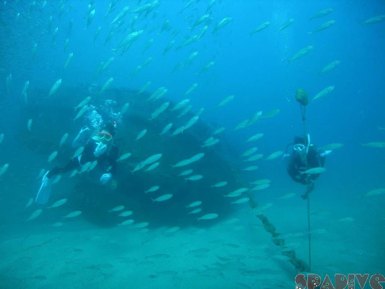 2007年10月撮影海フォトギャラリー|南紀白浜スパダイブ