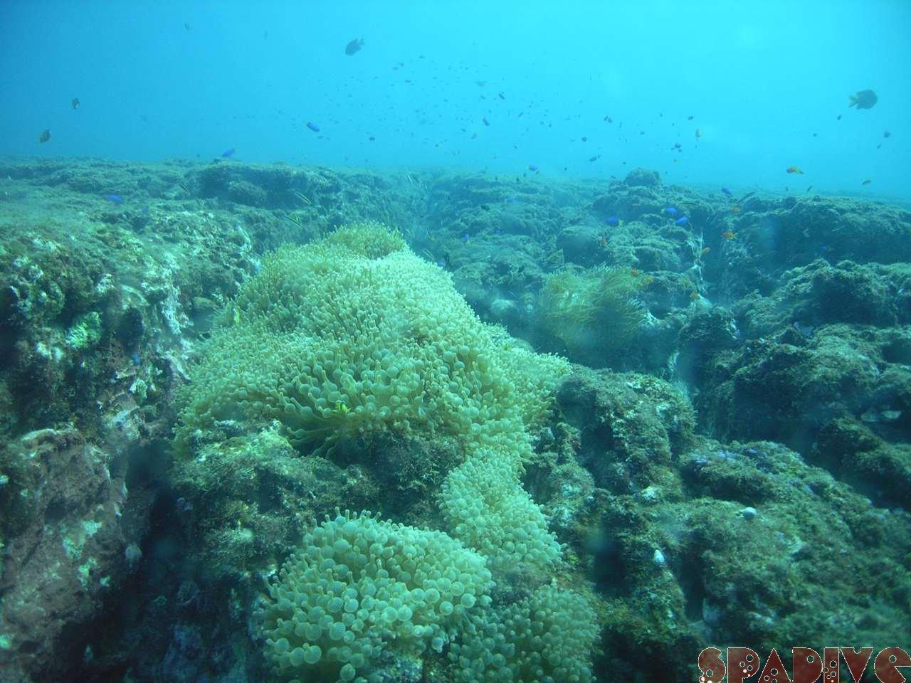 2007年11月撮影海フォトギャラリー|南紀白浜スパダイブ