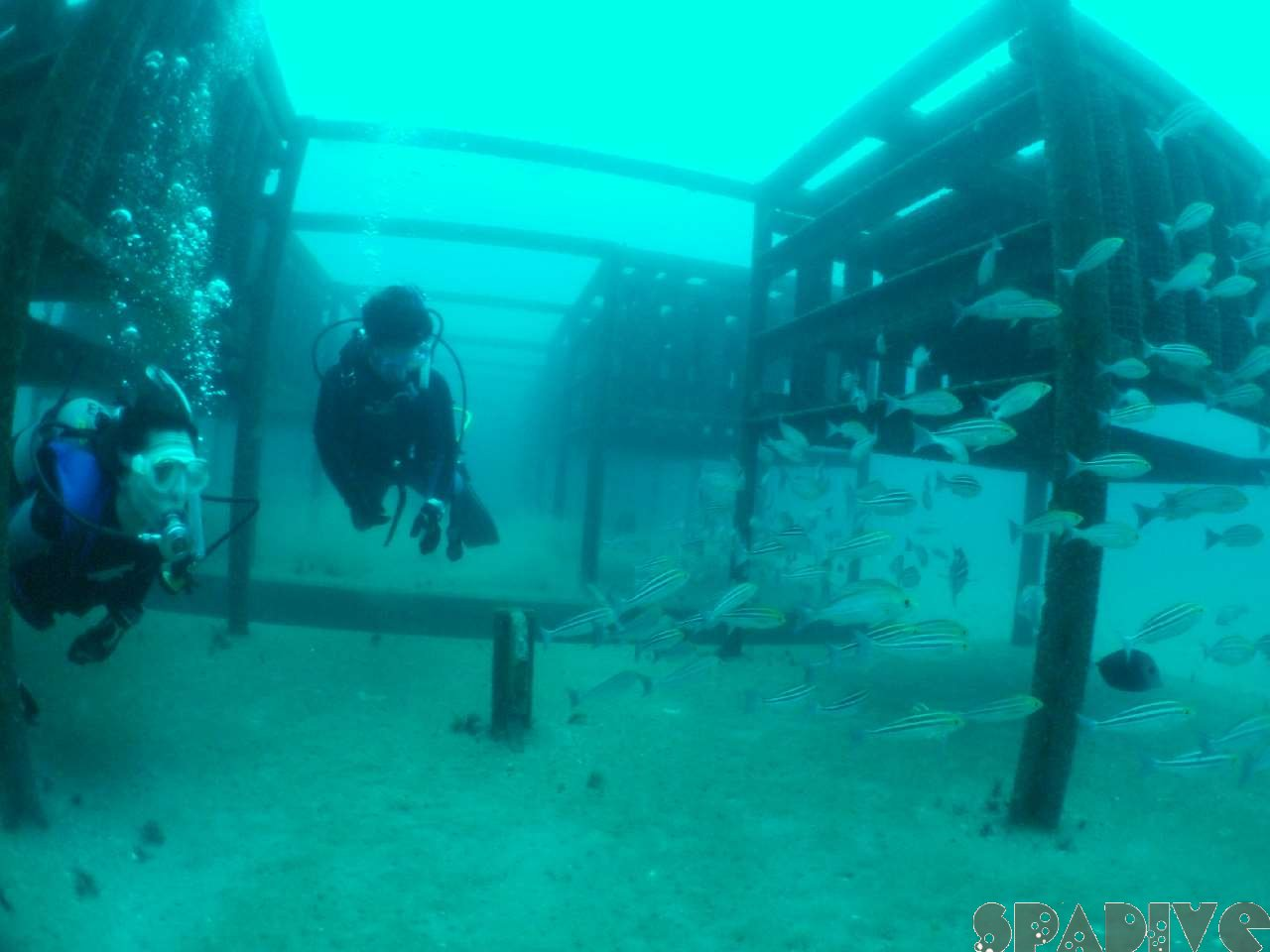 2008年6月撮影海フォトギャラリー|南紀白浜スパダイブ