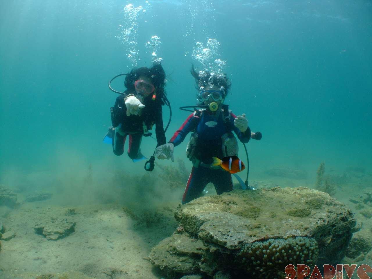 2008年8月撮影海フォトギャラリー 南紀白浜スパダイブ