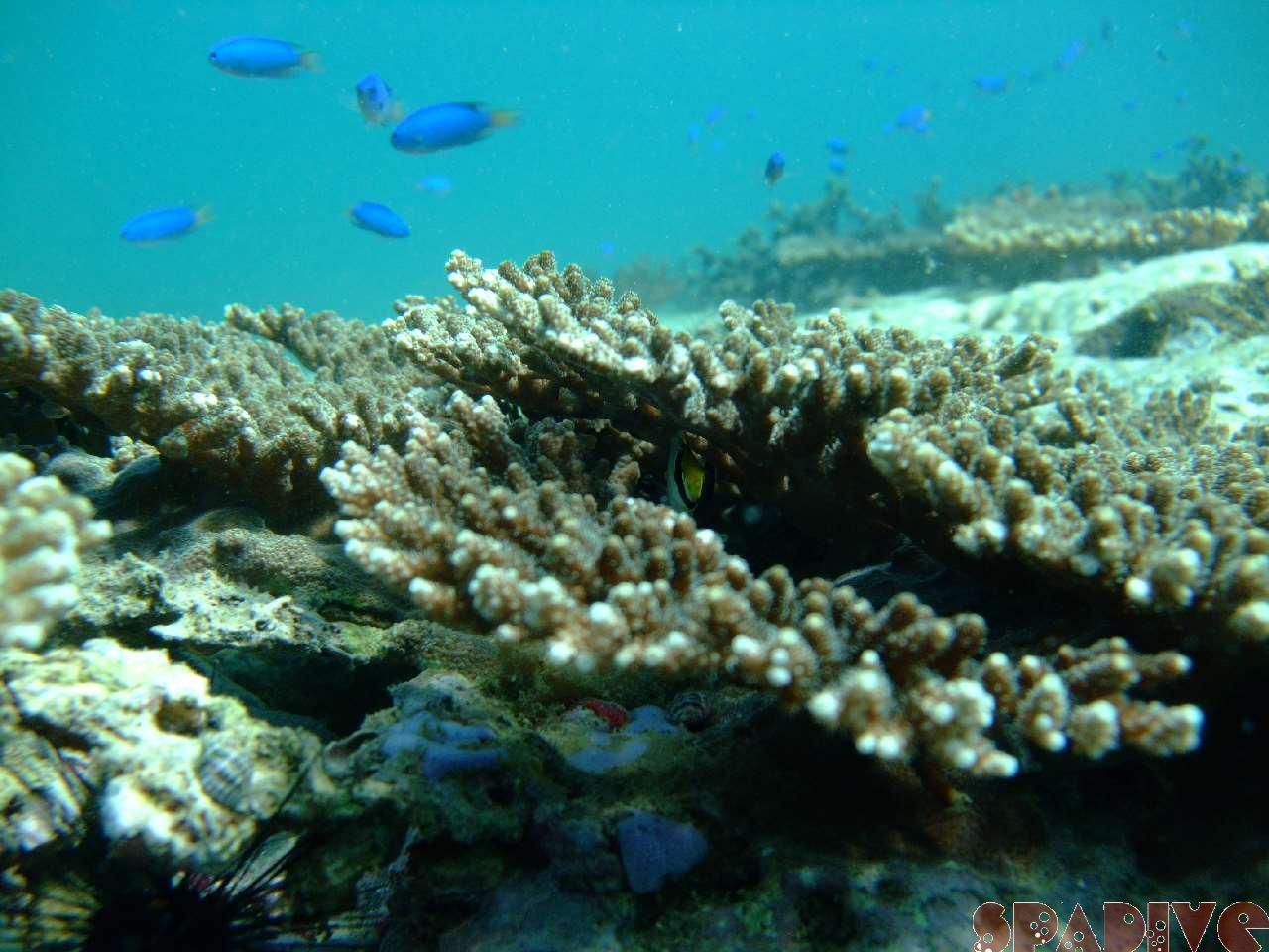 2008年9月撮影海フォトギャラリー|南紀白浜スパダイブ