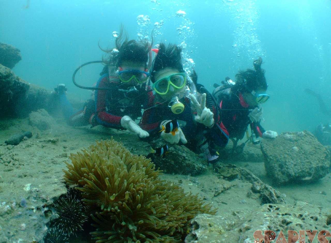 2008年10月撮影海フォトギャラリー|南紀白浜スパダイブ