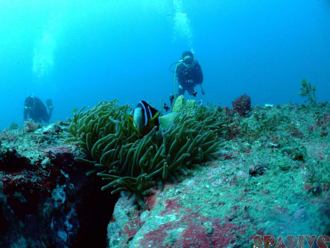 2008年11月撮影海フォトギャラリー|南紀白浜スパダイブ
