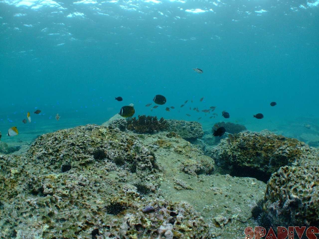 2008年12月撮影海フォトギャラリー|南紀白浜スパダイブ