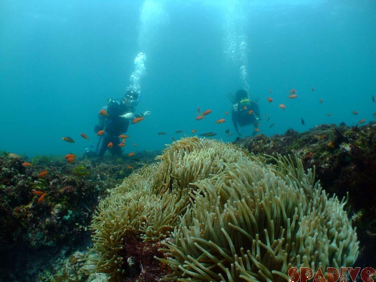 2009年5月撮影海フォトギャラリー|南紀白浜スパダイブ