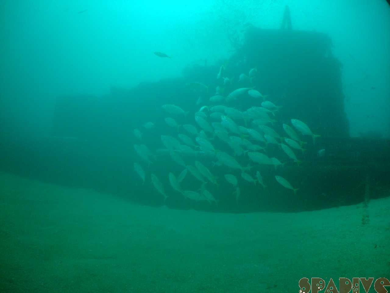 北の根&沈船ボートファンダイブ|7/29/2009南紀白浜