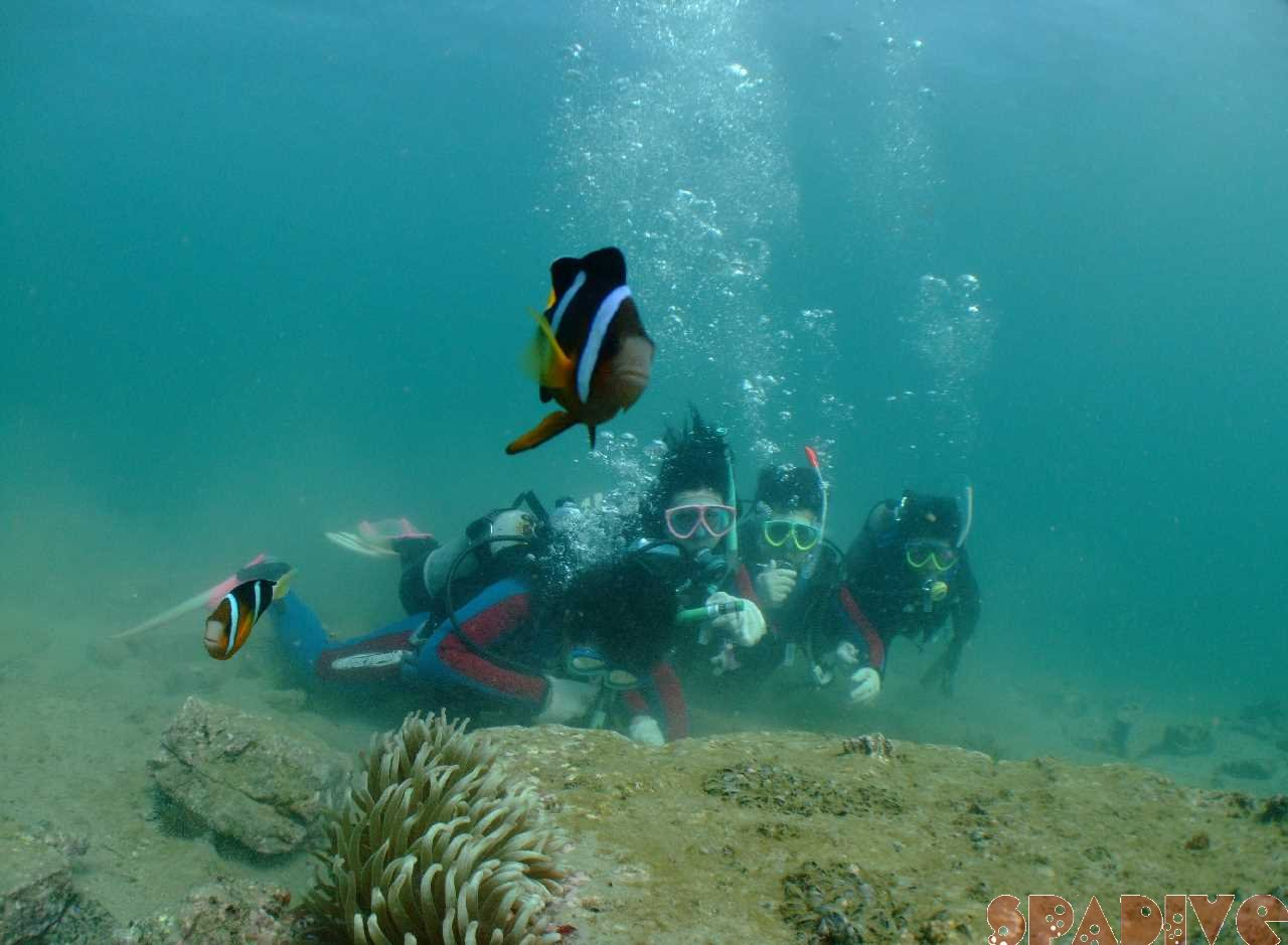 2009年8月撮影海フォトギャラリー|南紀白浜スパダイブ