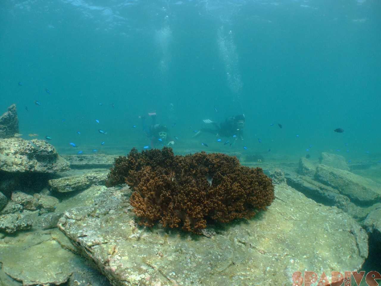 2009年9月撮影海フォトギャラリー|南紀白浜スパダイブ