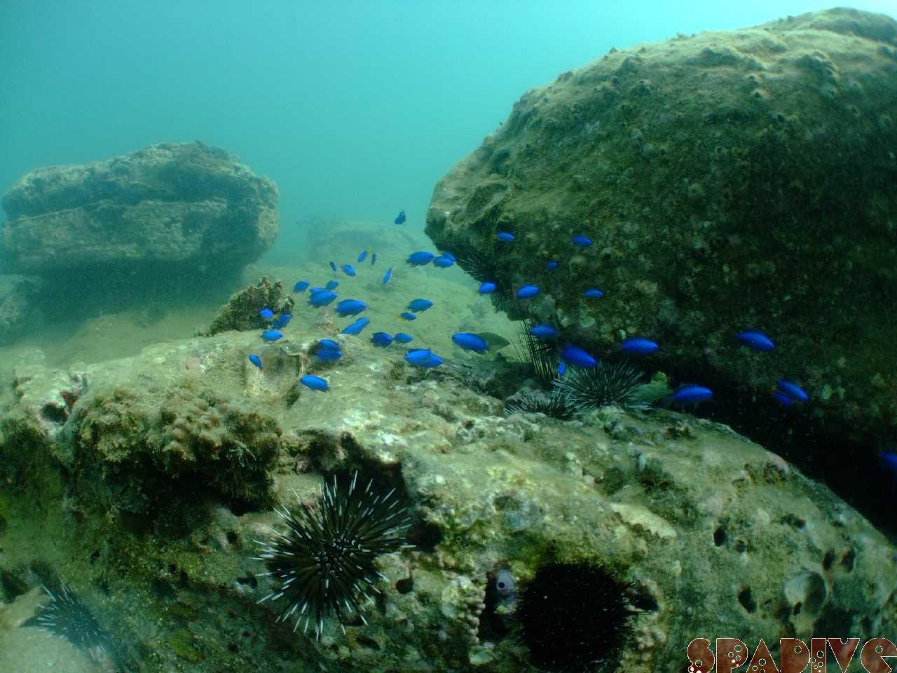 ファイル sea20090909-2.jpg