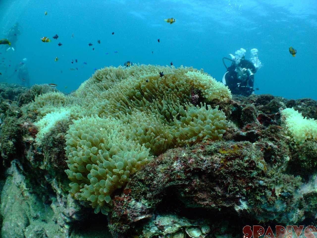2009年10月撮影海フォトギャラリー 南紀白浜スパダイブ