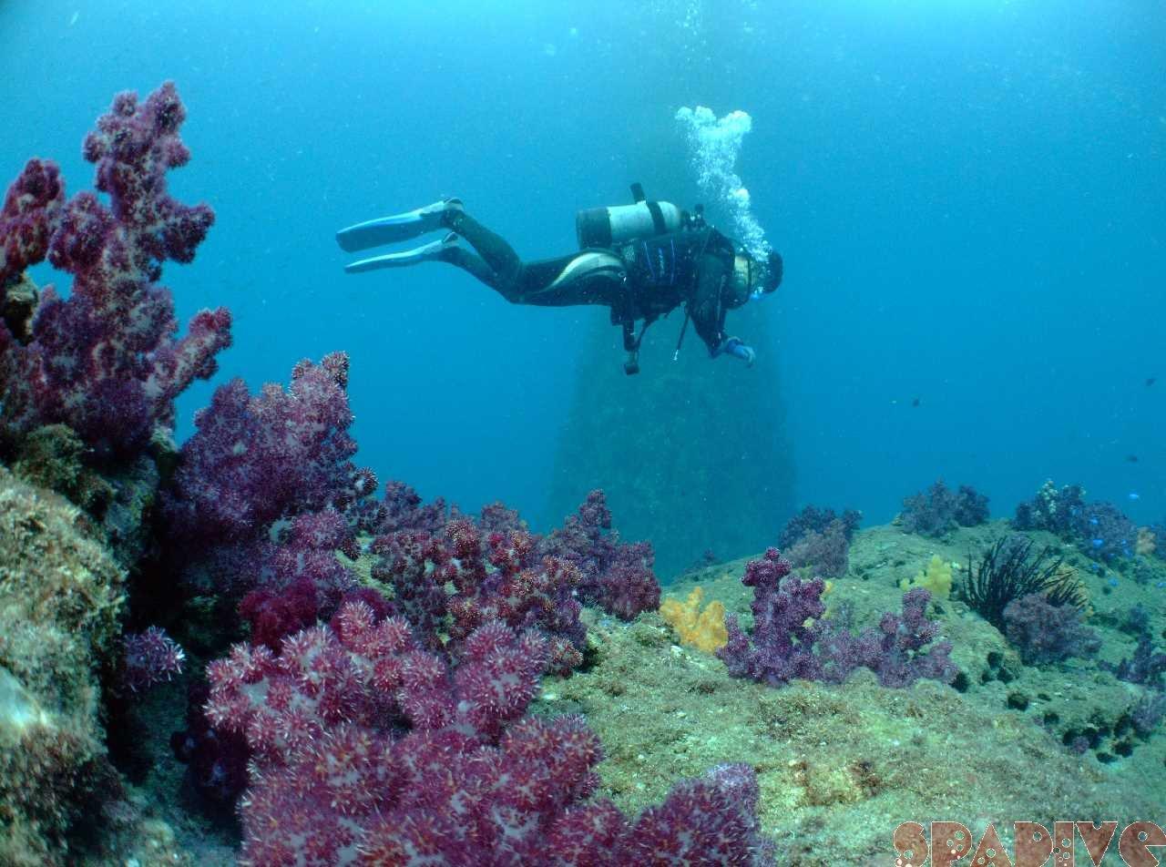 2009年11月撮影海フォトギャラリー|南紀白浜スパダイブ