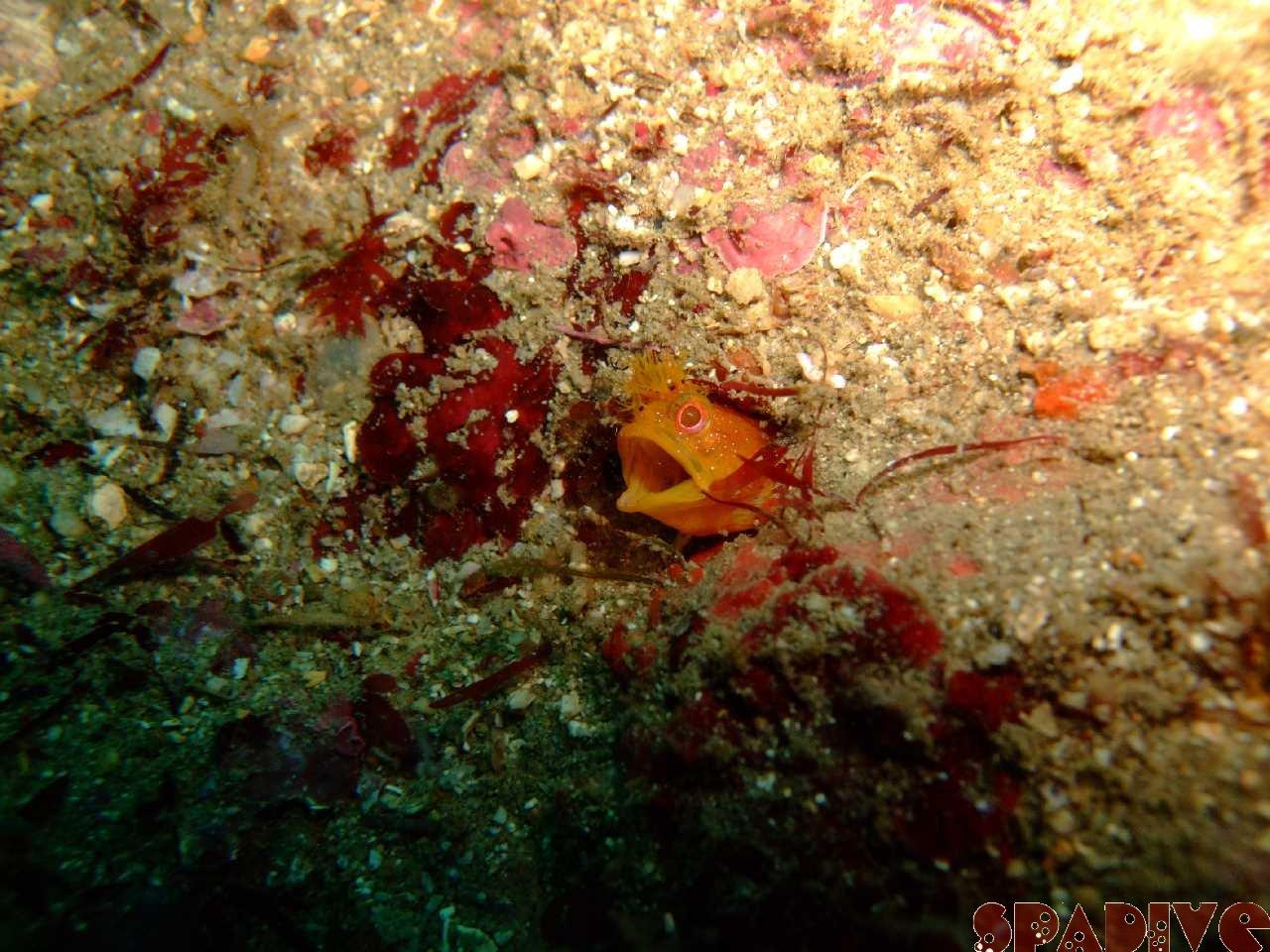 2009年12月撮影海フォトギャラリー|南紀白浜スパダイブ