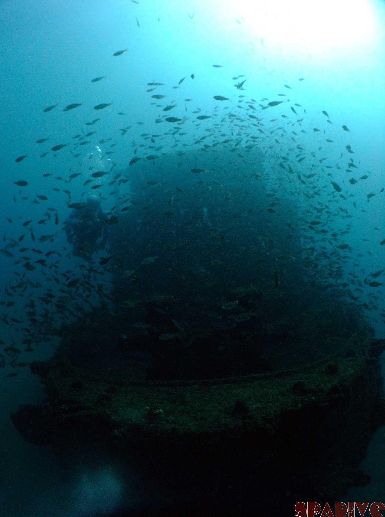 三段壁&北の根(沈船)ボートファンダイビング 12/12/2009南紀白浜