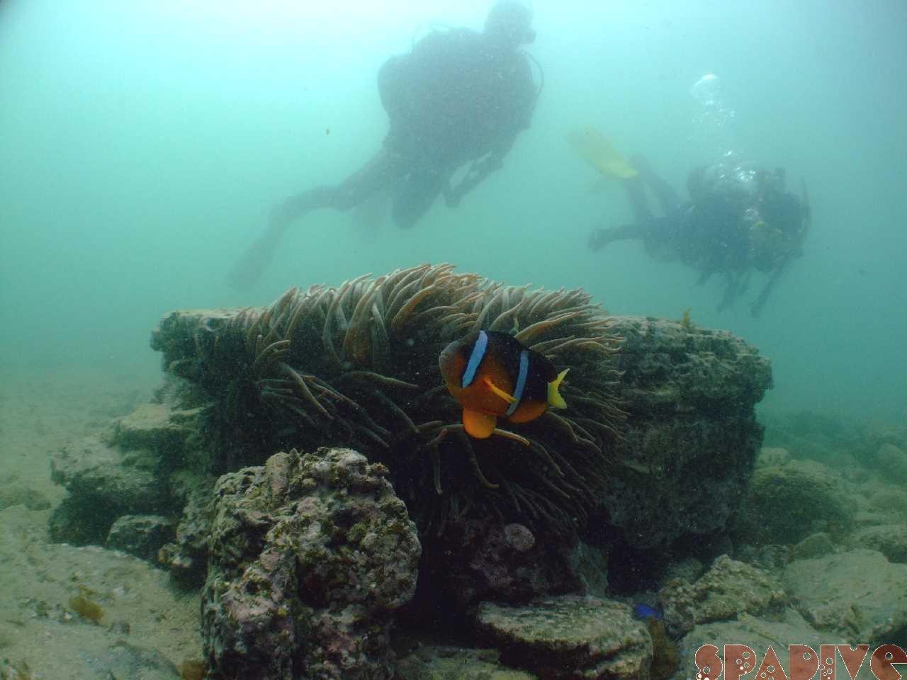 2010年3月撮影海フォトギャラリー|南紀白浜スパダイブ