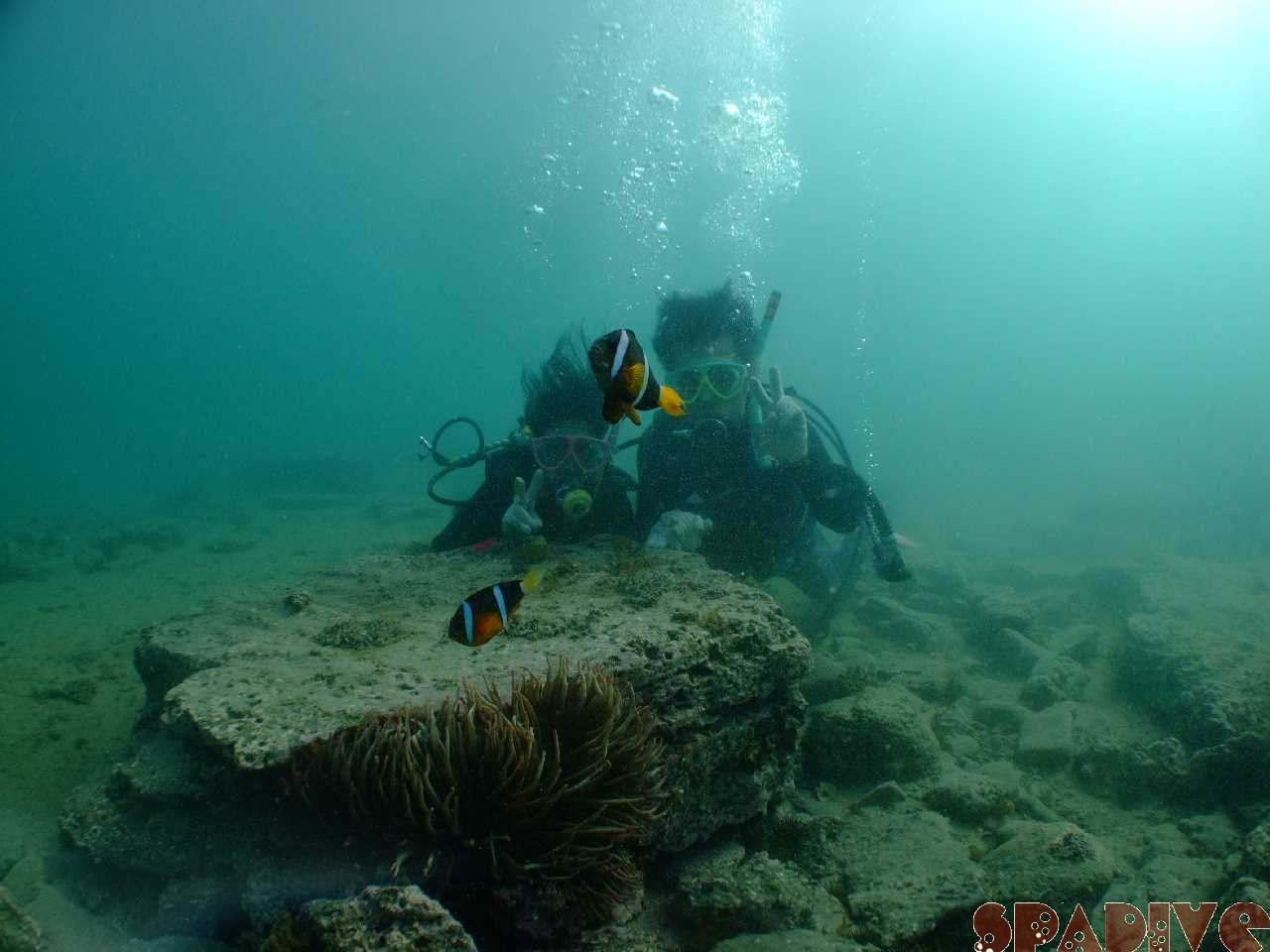 2010年4月撮影海フォトギャラリー|南紀白浜スパダイブ