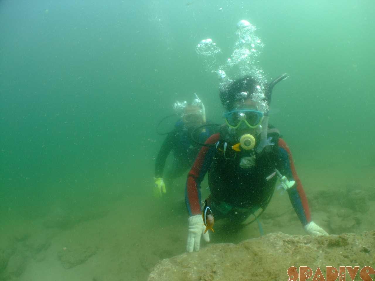 体験ダイビング&OWDライセンス取得コース|7/17/2010白浜海情報
