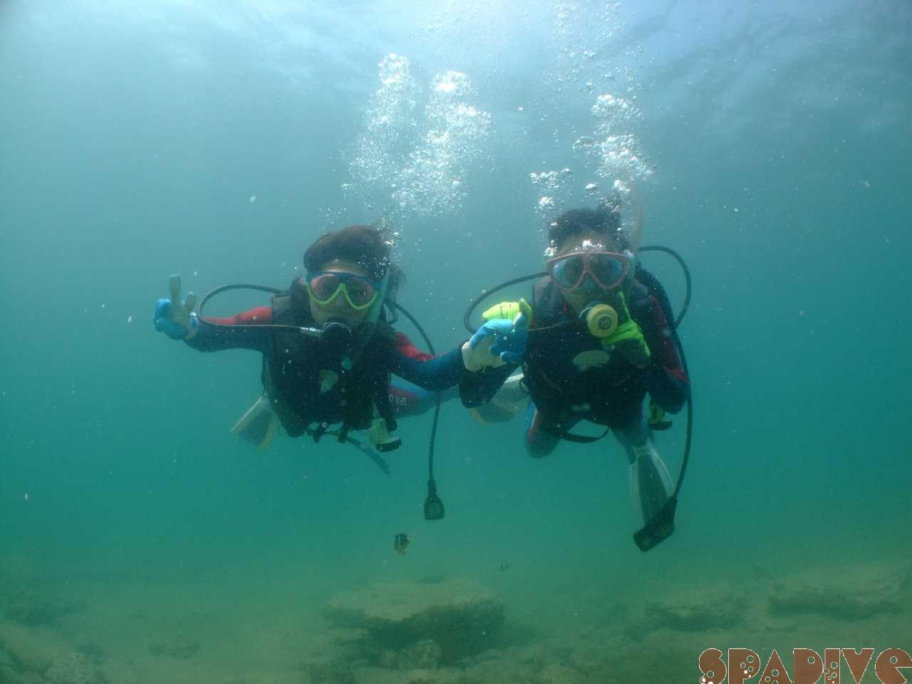 2010年7月撮影海フォトギャラリー|南紀白浜スパダイブ