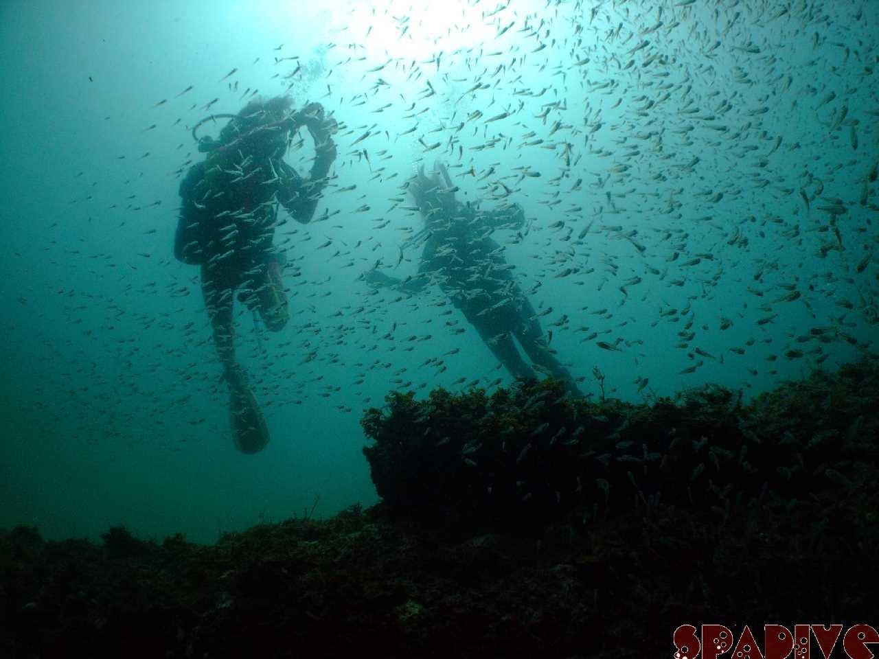 色津/沈船ボートダイブ スノーケリング&体験ダイビング 8/9/2010