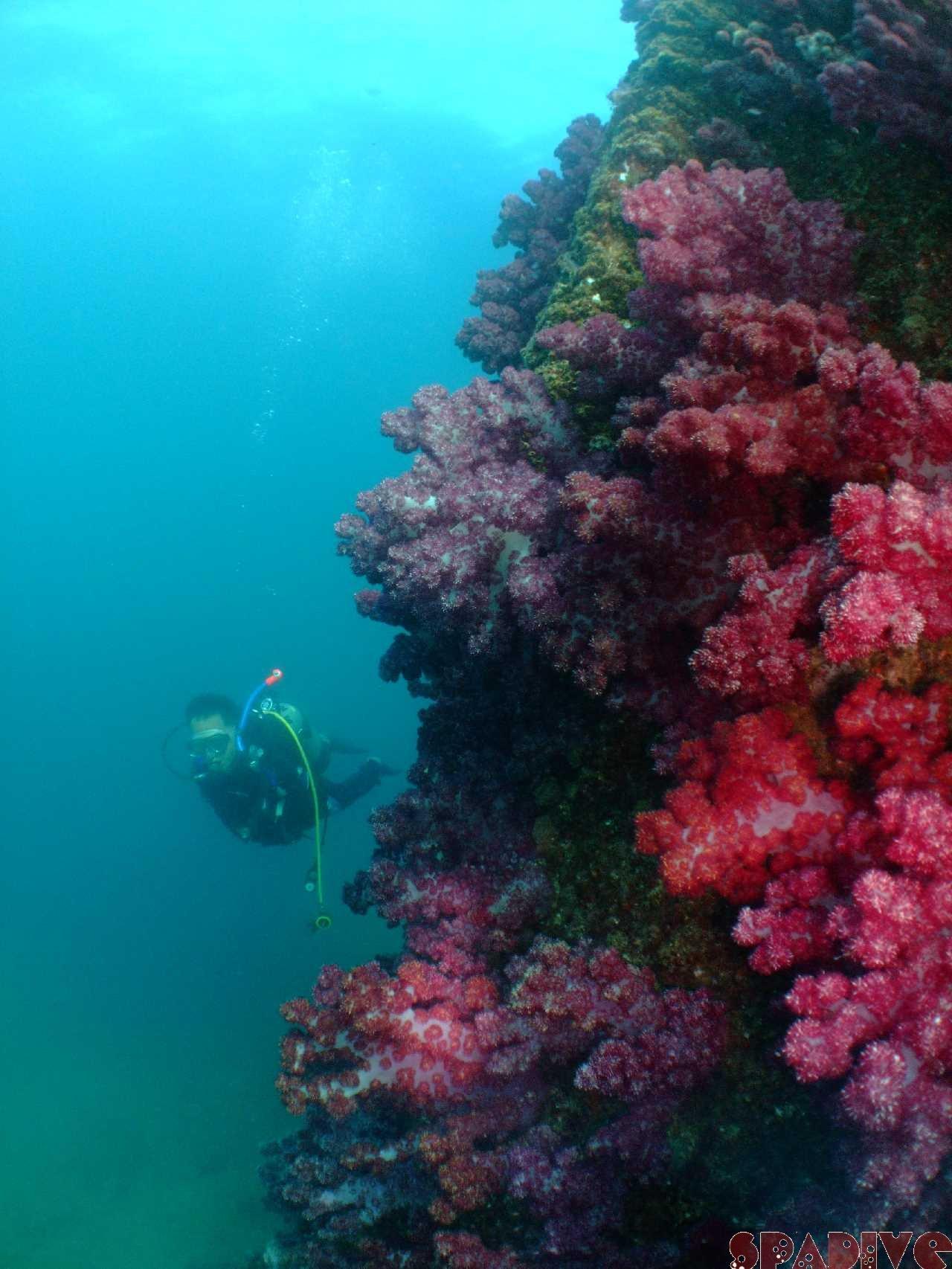 色津/中島観測塔ボートファンダイブ|体験ダイビング|8/24/2010
