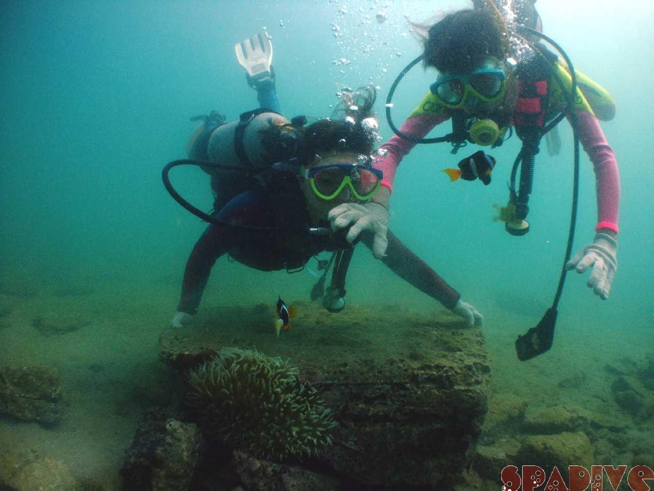 体験ダイビング|ビーチファンダイブ|9/2/2010白浜権現崎