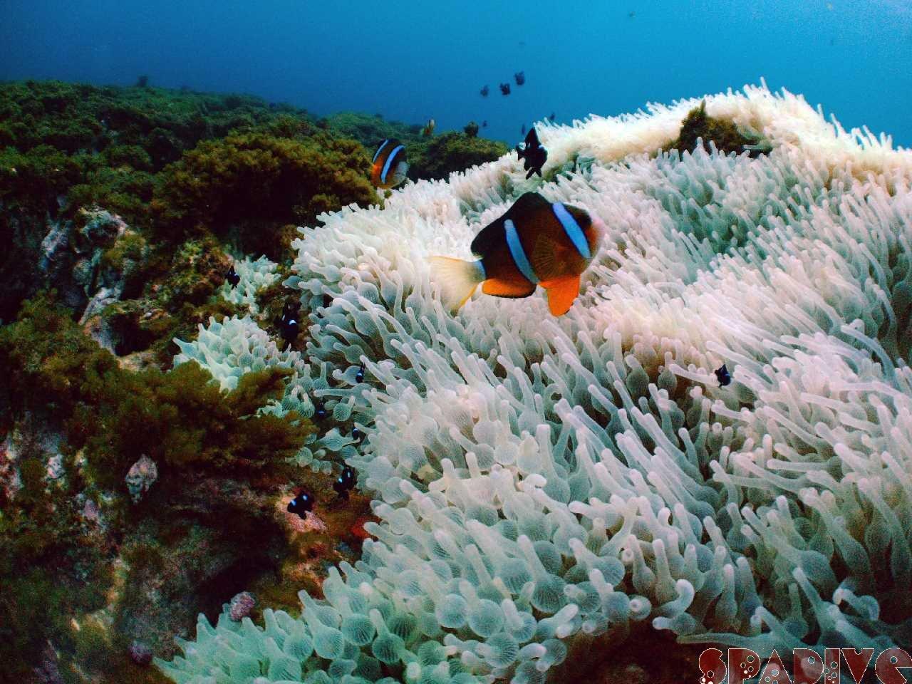 2010年9月撮影海フォトギャラリー|南紀白浜スパダイブ