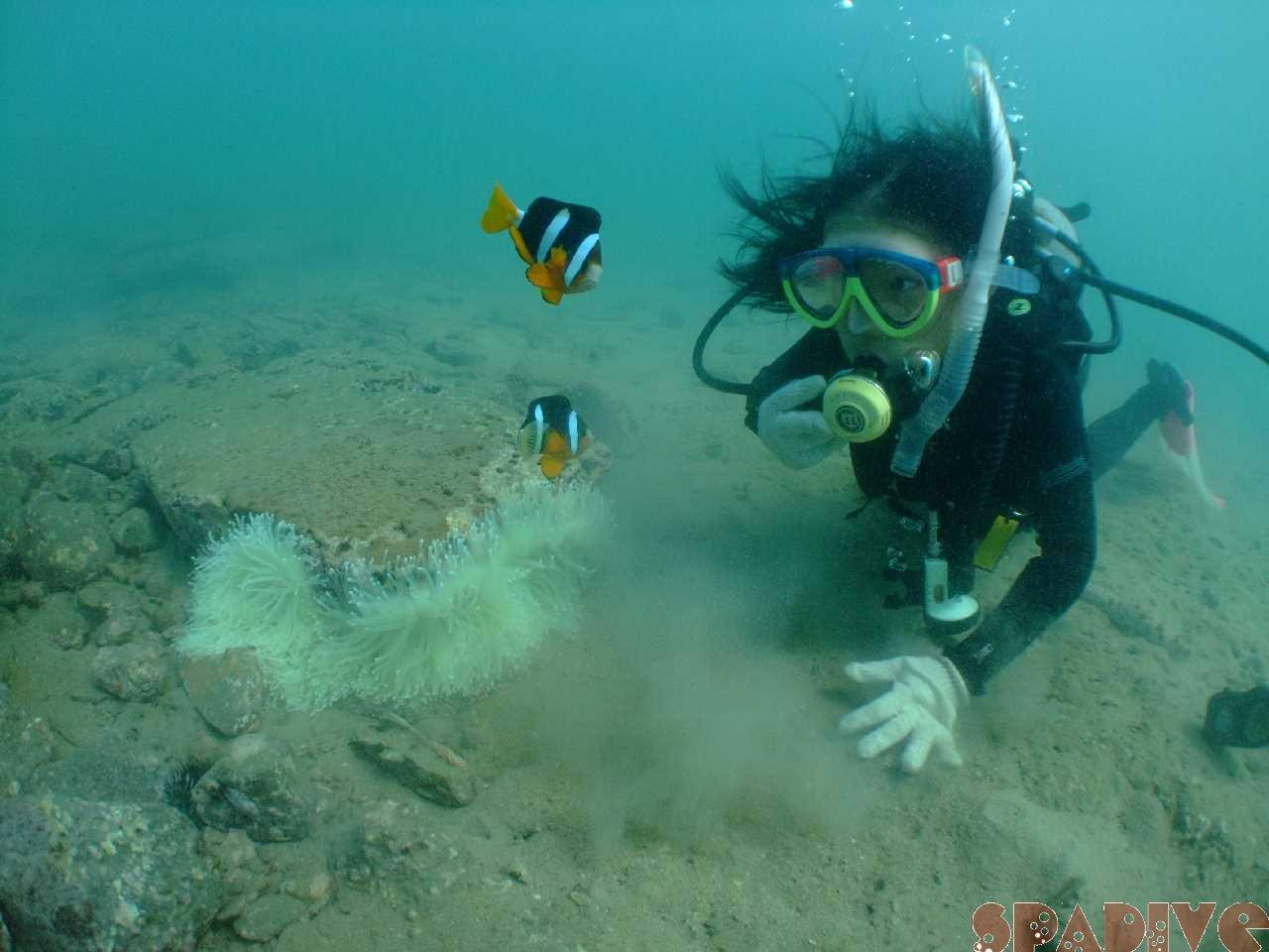 2010年10月撮影海フォトギャラリー|南紀白浜スパダイブ