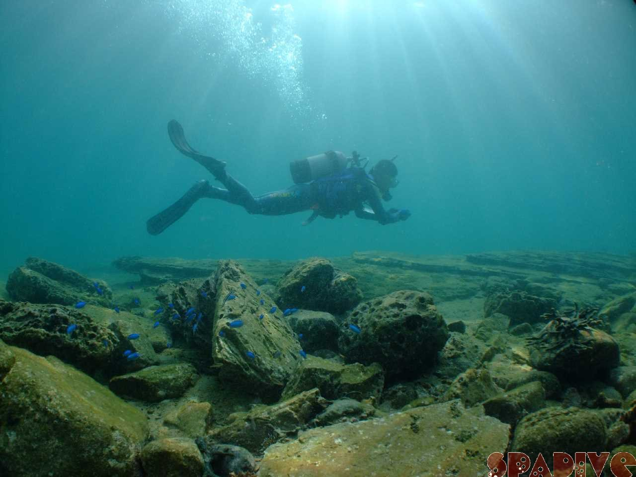 AOWアドバンスコース-体験ダイビング|11/6/2010南紀白浜権現崎