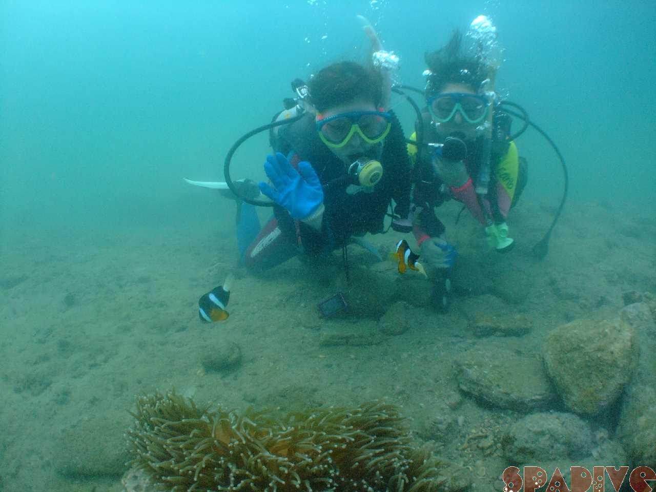 2011年8月撮影海フォトギャラリー|南紀白浜スパダイブ