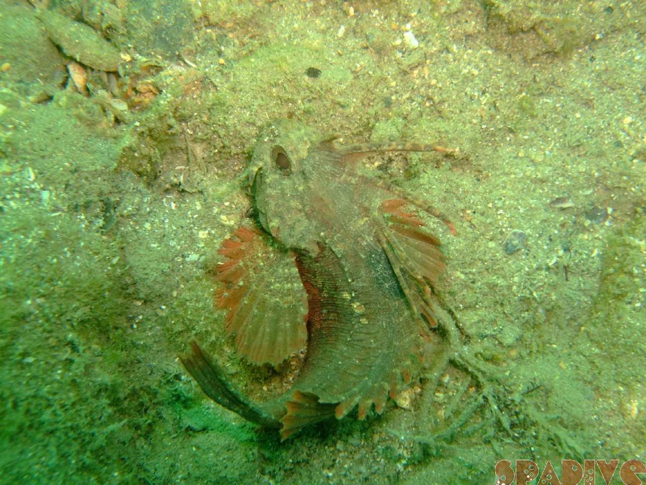 ファイル sea20110813-2.jpg