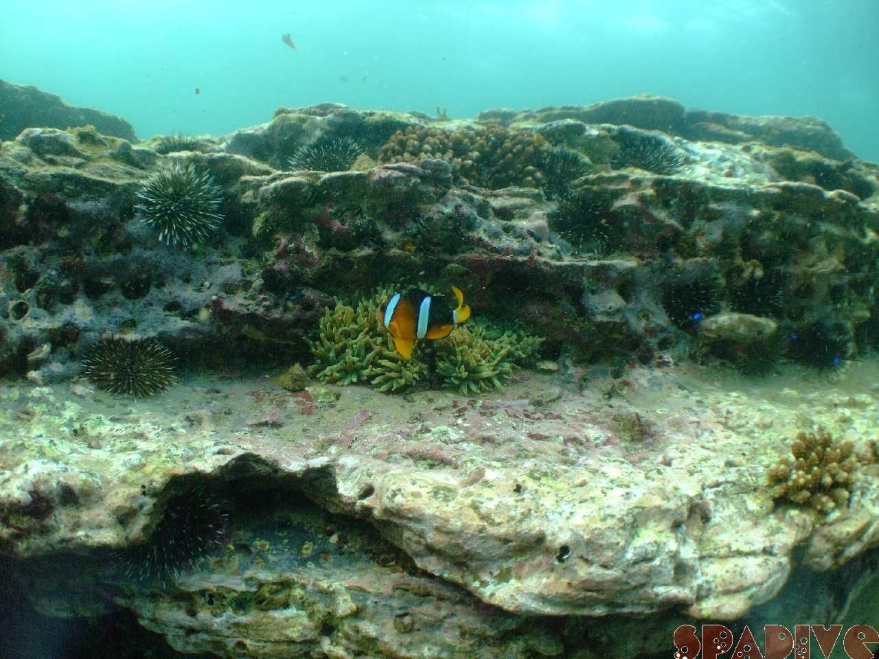 ファイル sea20110817.jpg