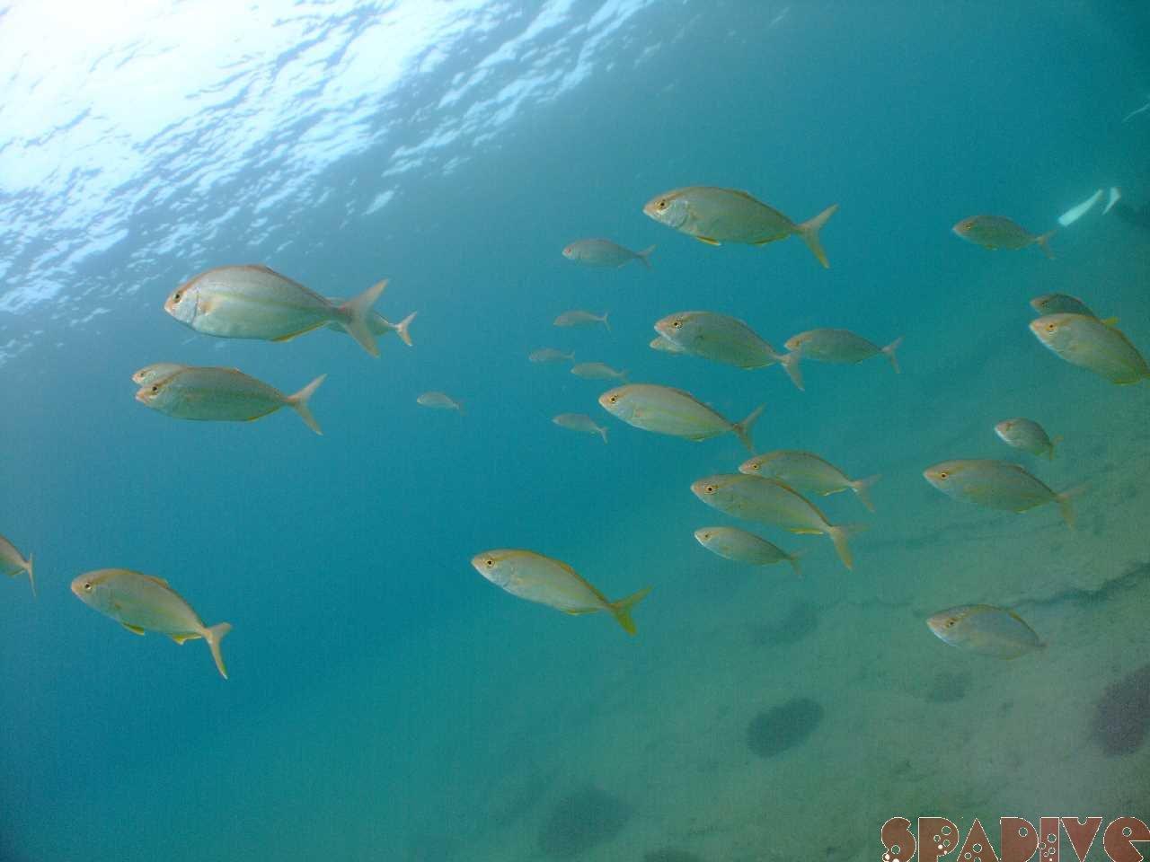 ファイル sea20110820.jpg