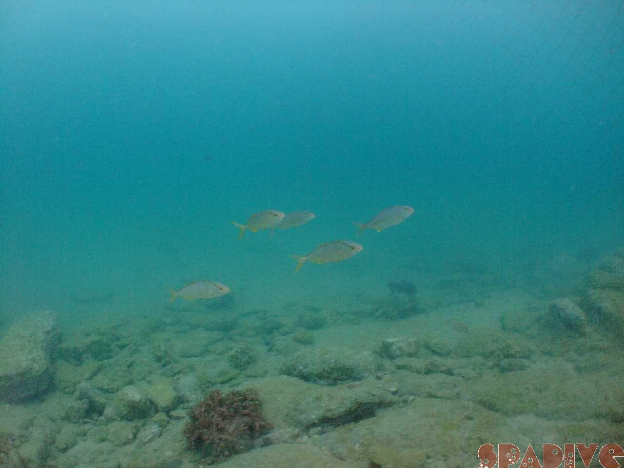 ファイル sea20110825.jpg