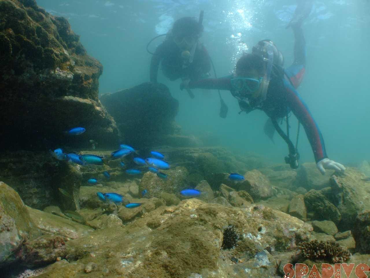 2011年9月撮影海フォトギャラリー|南紀白浜スパダイブ