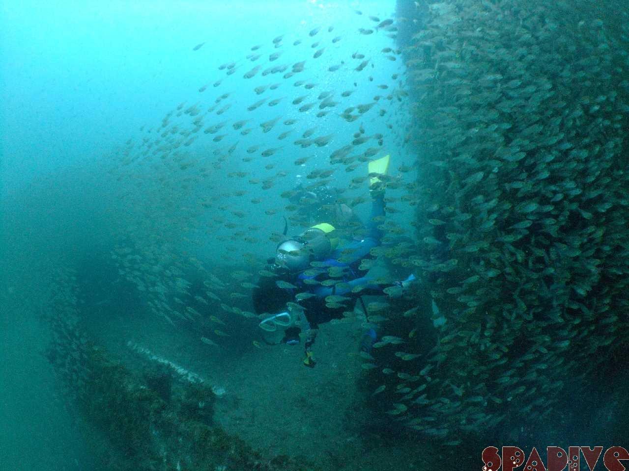 Wアーチ 沈船ボートダイブでAOWコース|6/27/2012 海情報