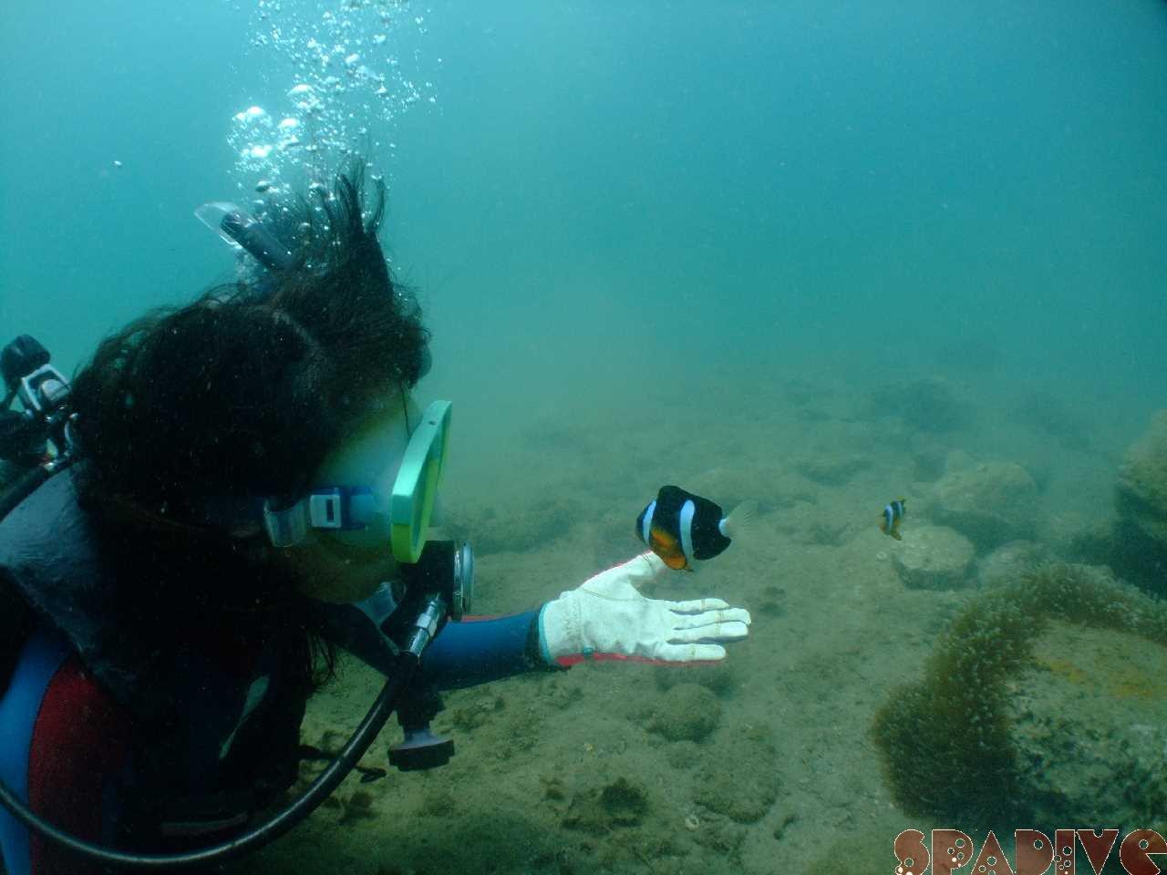 2012年7月撮影海フォトギャラリー|南紀白浜スパダイブ