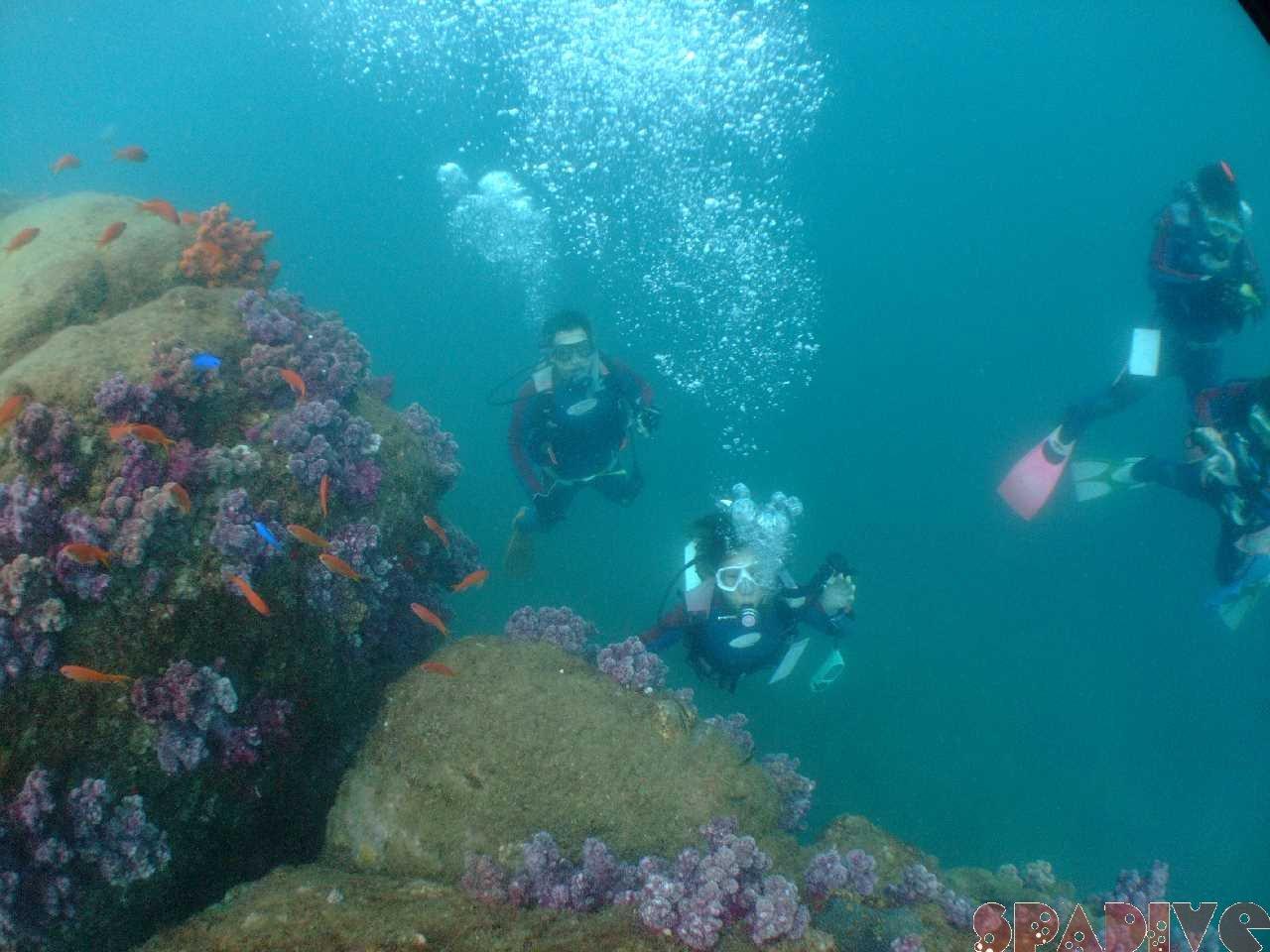千石丘/沈船AOWコース|体験スノーケリング&ダイビング|7/29/2012