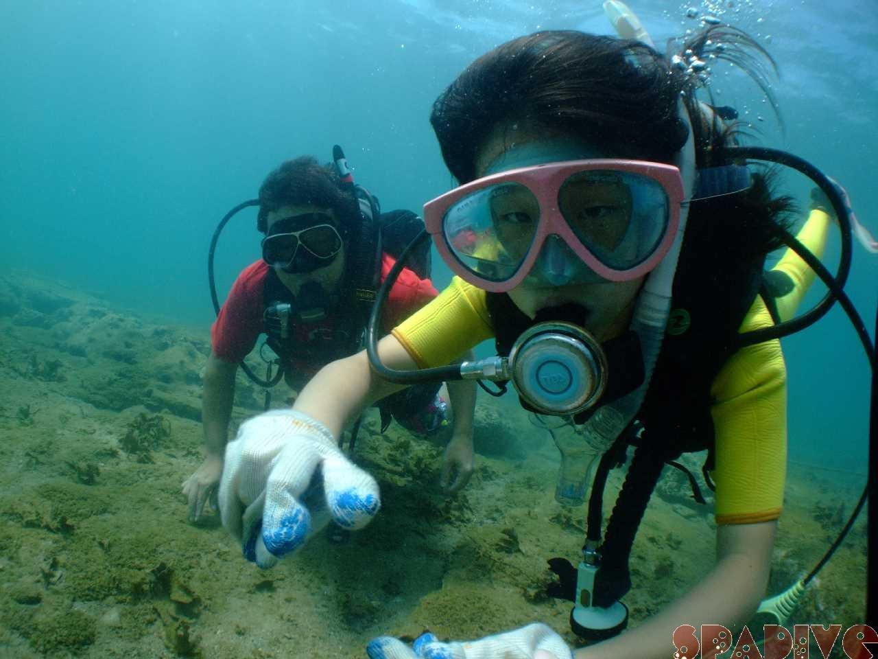 体験ダイビング 体験スノーケリング|8/22/2012 権現崎