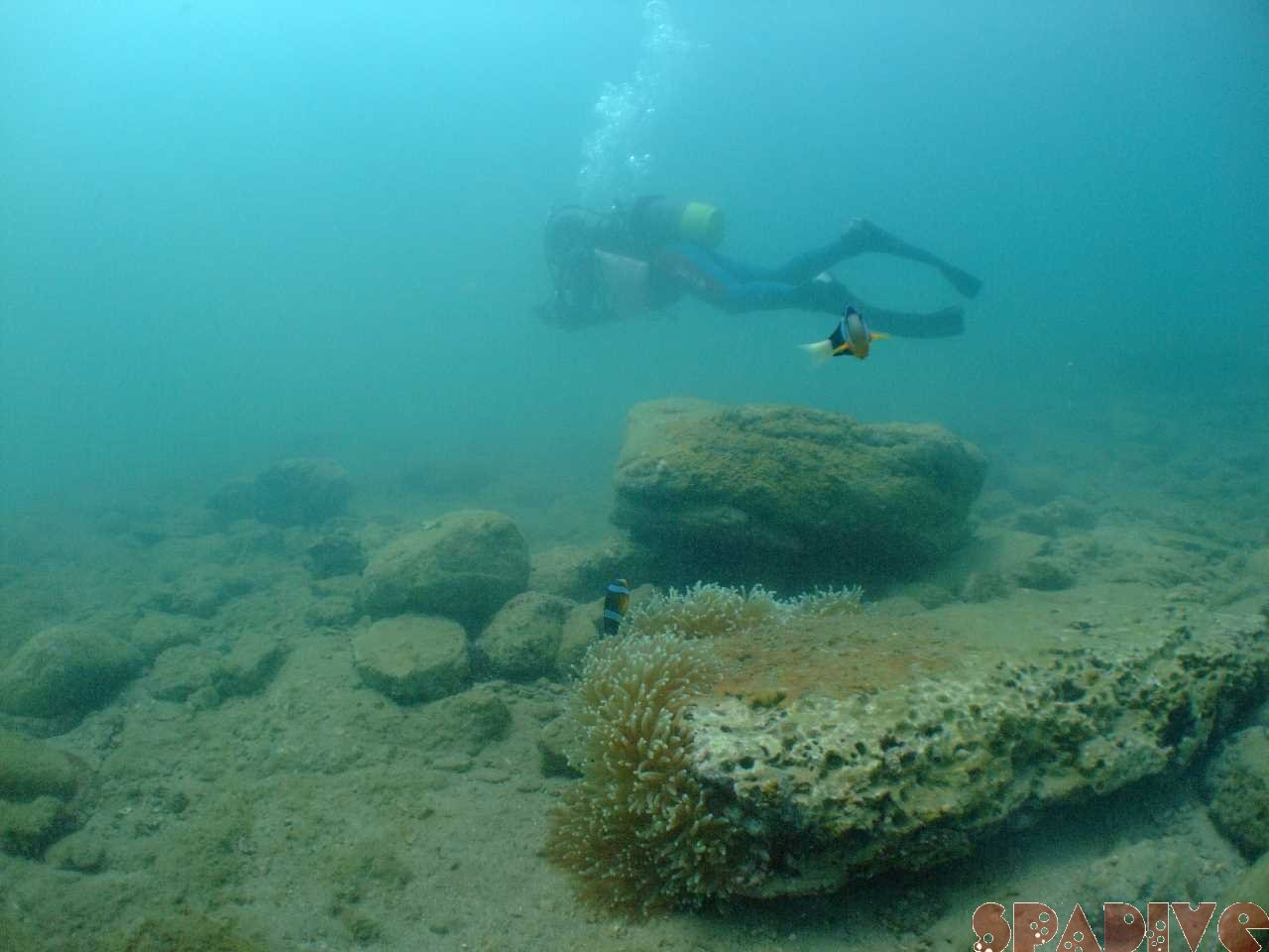 AOWコース 体験ダイビング|8/23/2012南紀白浜 権現崎