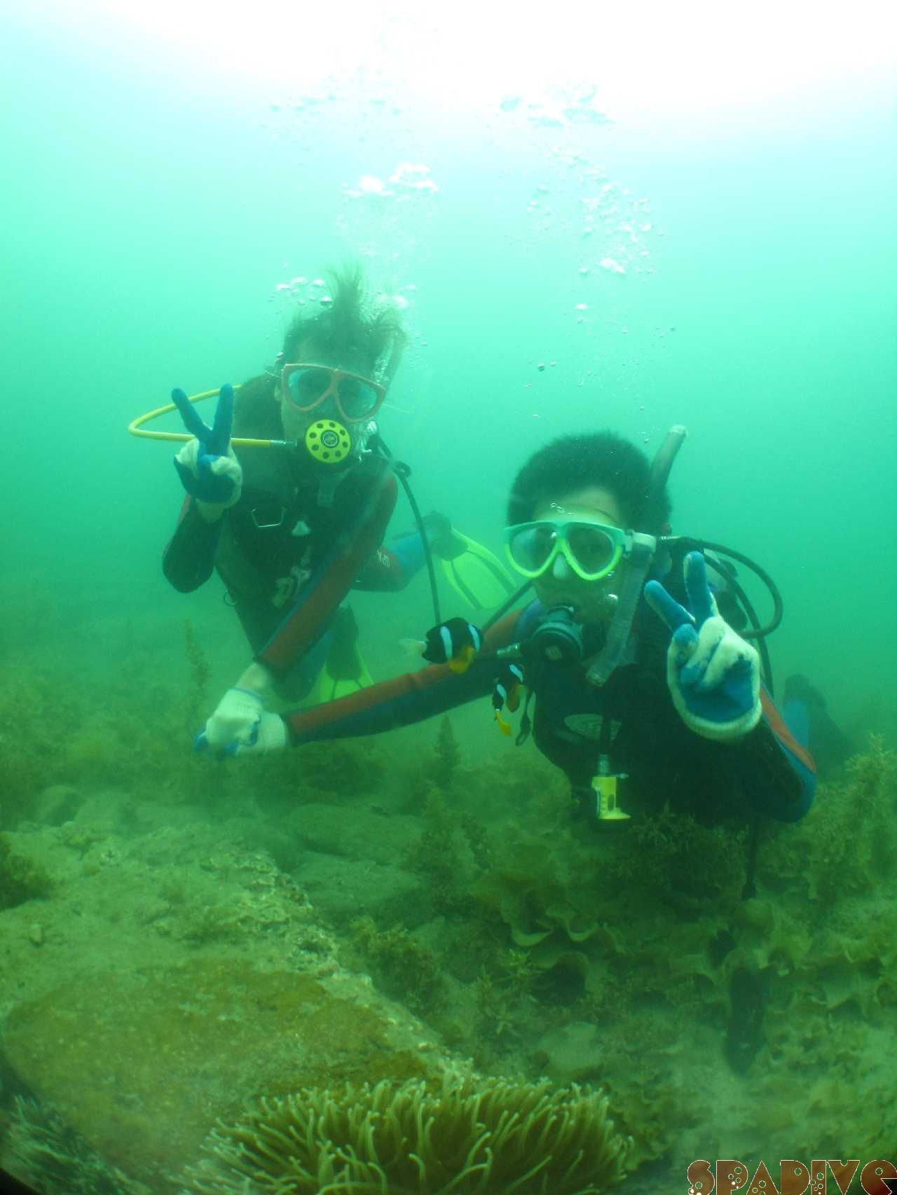2014年06月撮影海フォトギャラリー|南紀白浜スパダイブ