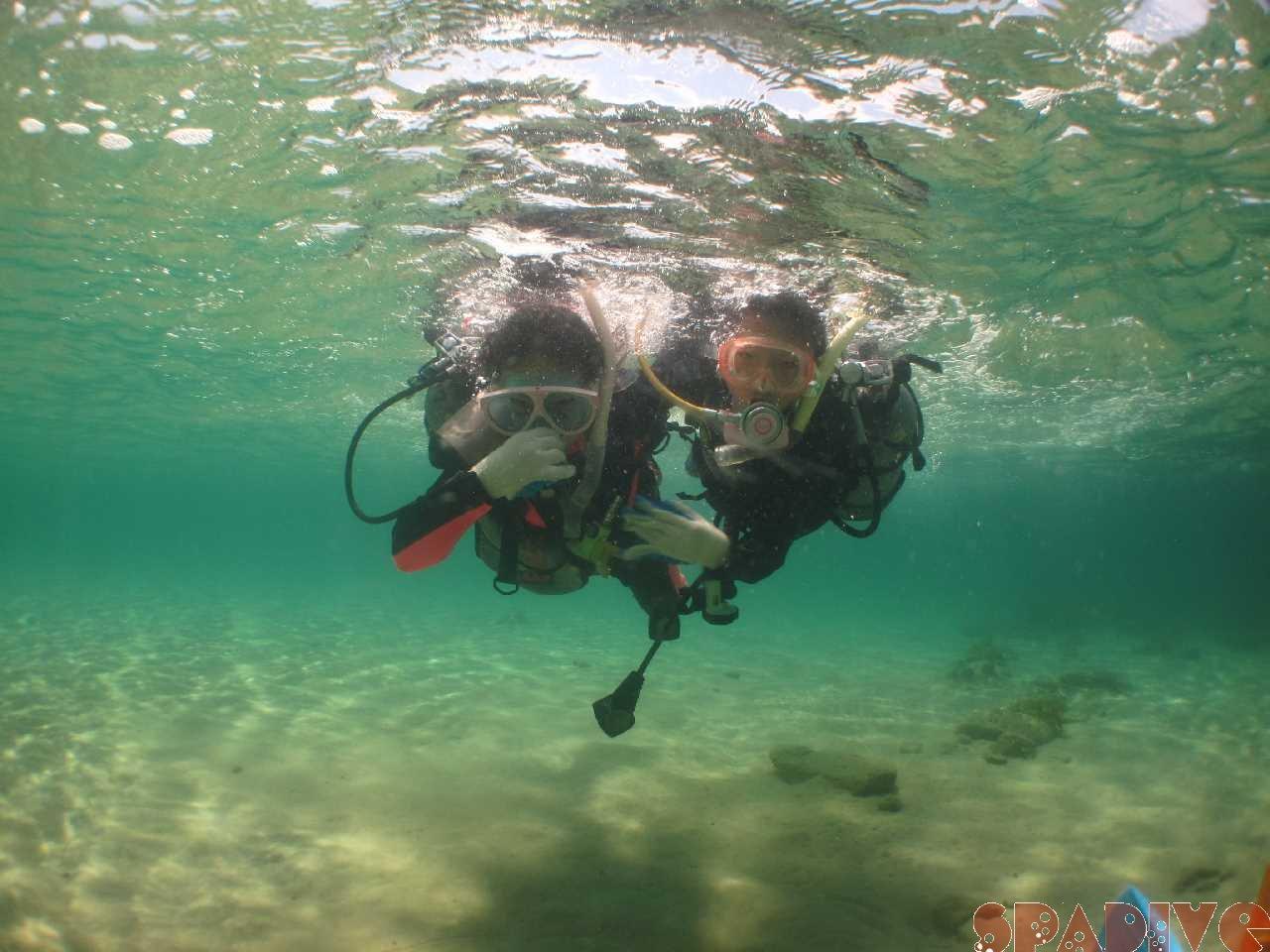 2015年04月撮影海フォトギャラリー 南紀白浜スパダイブ