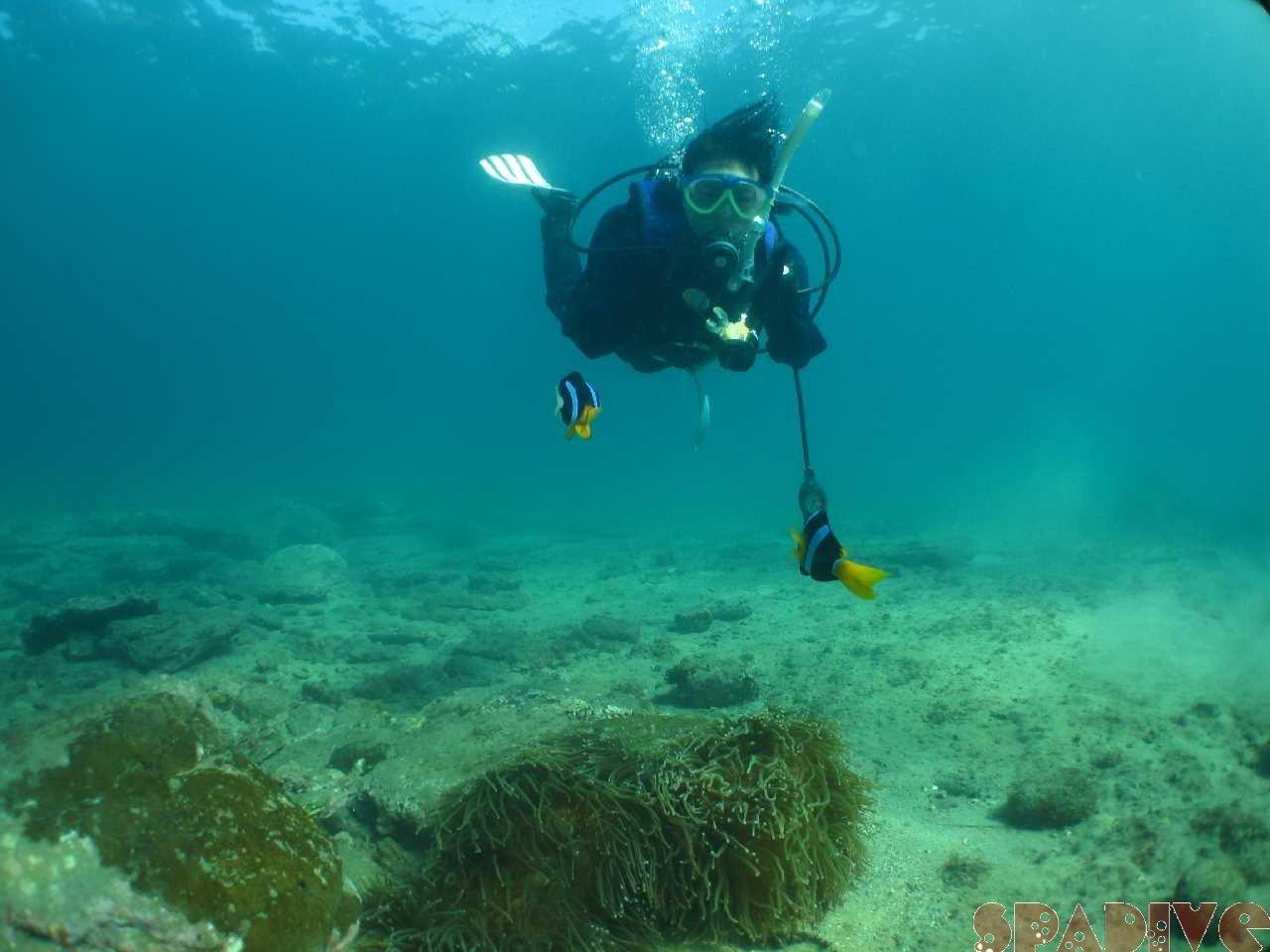 2015年12月撮影海フォトギャラリー 南紀白浜スパダイブ